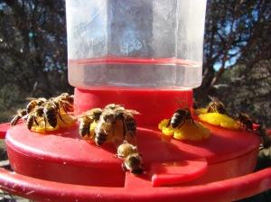 2012 Nov.1Birds and Bees 002