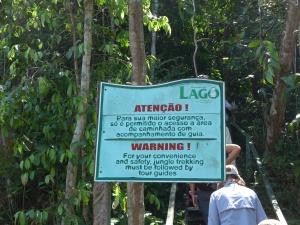 8 Manaus Jungle treck 1 (44)